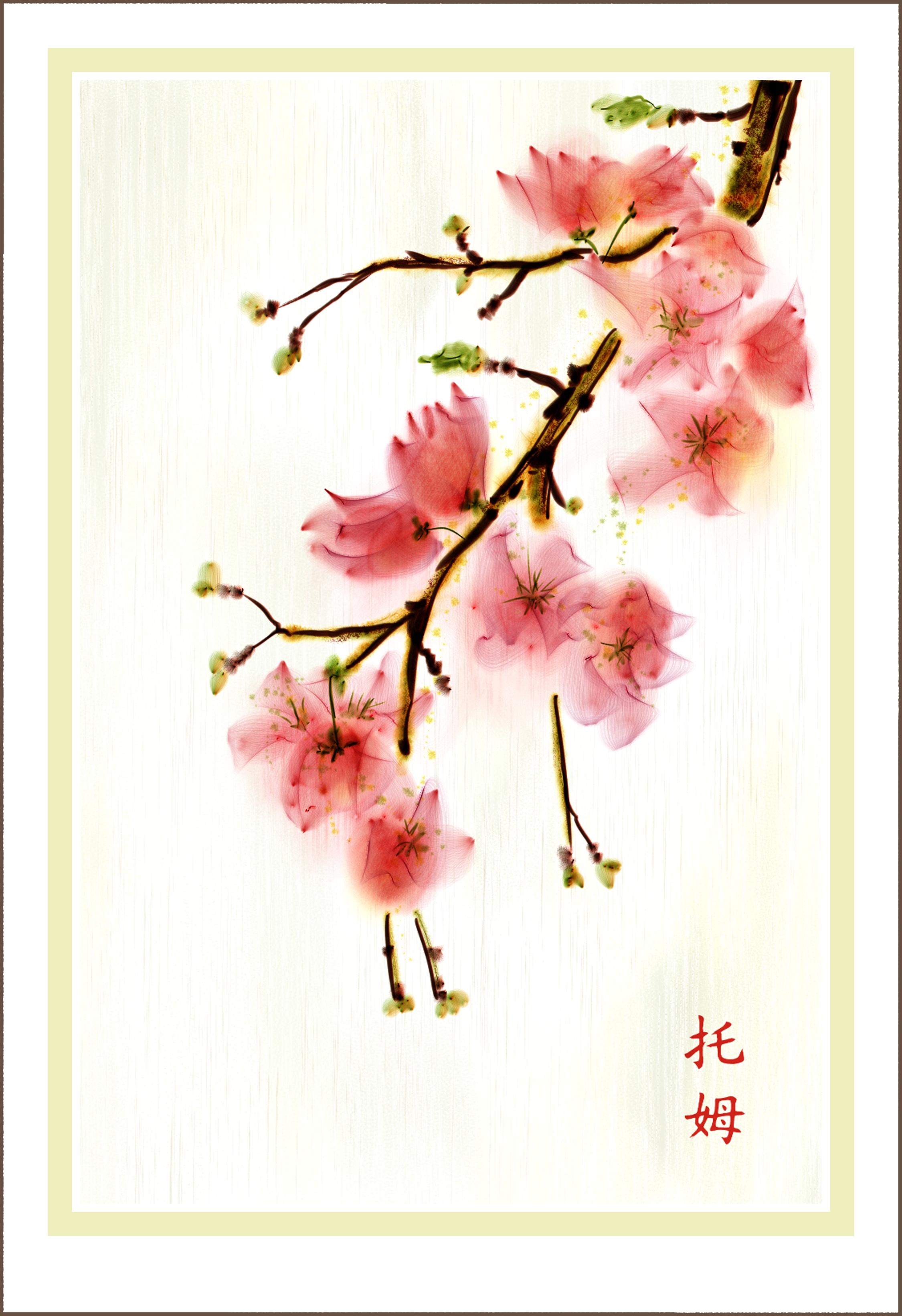 cherry blossom 3 009