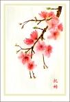 Cherry Blossom 3_009