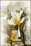 Japanese Magnolia Watercolor