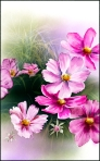 pink flowers-new-2A_002