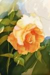 Hilarie's Rose