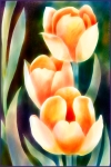 Tulips_001