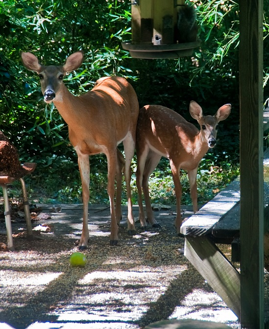Doreen and Fawn