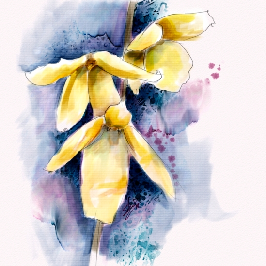 Forsythia Flowers, Corel Painter 12.2, Watercolor