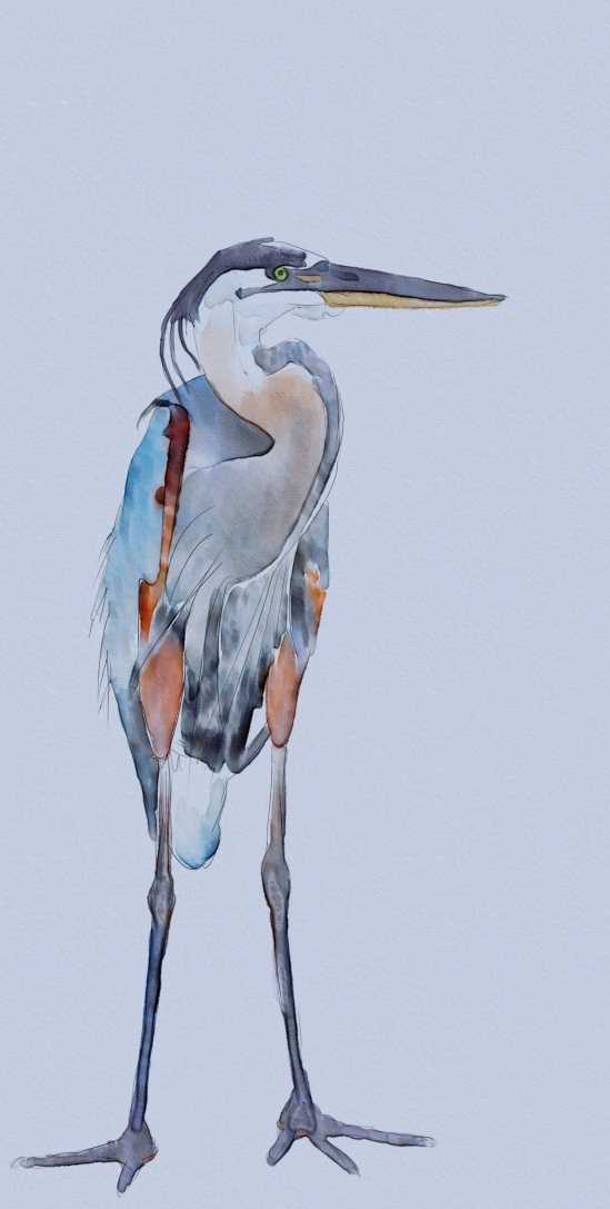 Great Blue Heron, Work in Progress, Watercolor, Corel Painter 2016